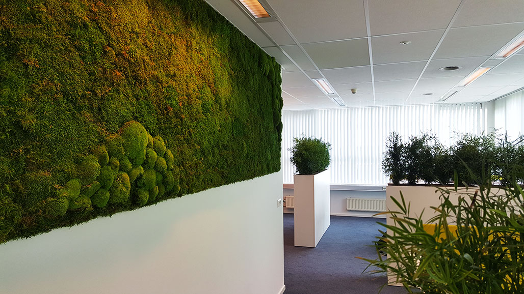 Moss walls bring nature in your office into life kuijpers