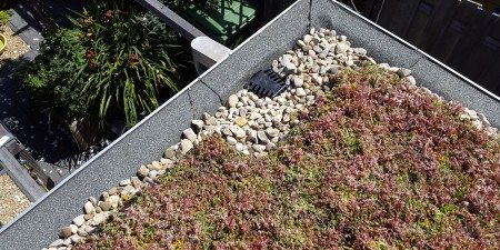 Green roofs reduce pressure on rain water drainage